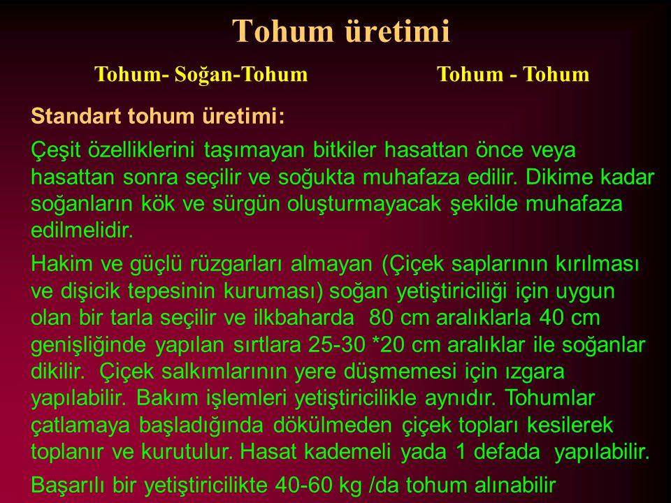 Tohum üretimi Tohum- Soğan-Tohum Tohum - Tohum Standart tohum üretimi: