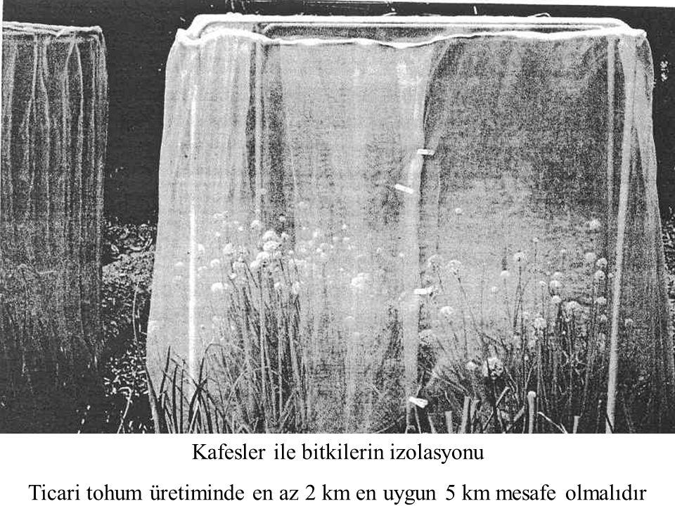 Kafesler ile bitkilerin izolasyonu