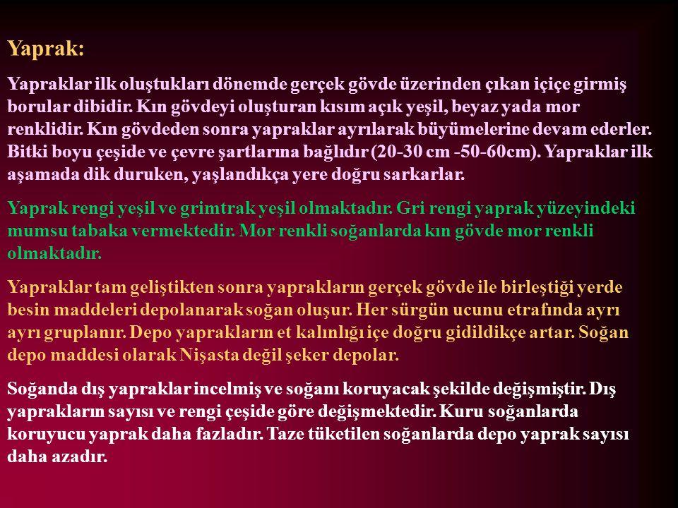 Yaprak: