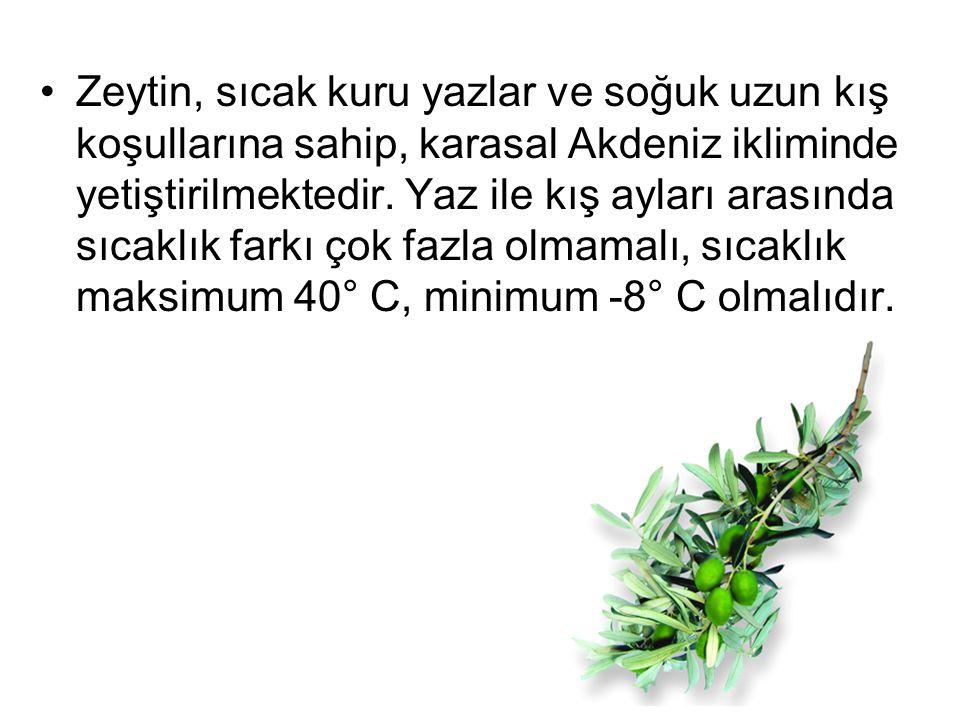 Zeytin, sıcak kuru yazlar ve soğuk uzun kış koşullarına sahip, karasal Akdeniz ikliminde yetiştirilmektedir.