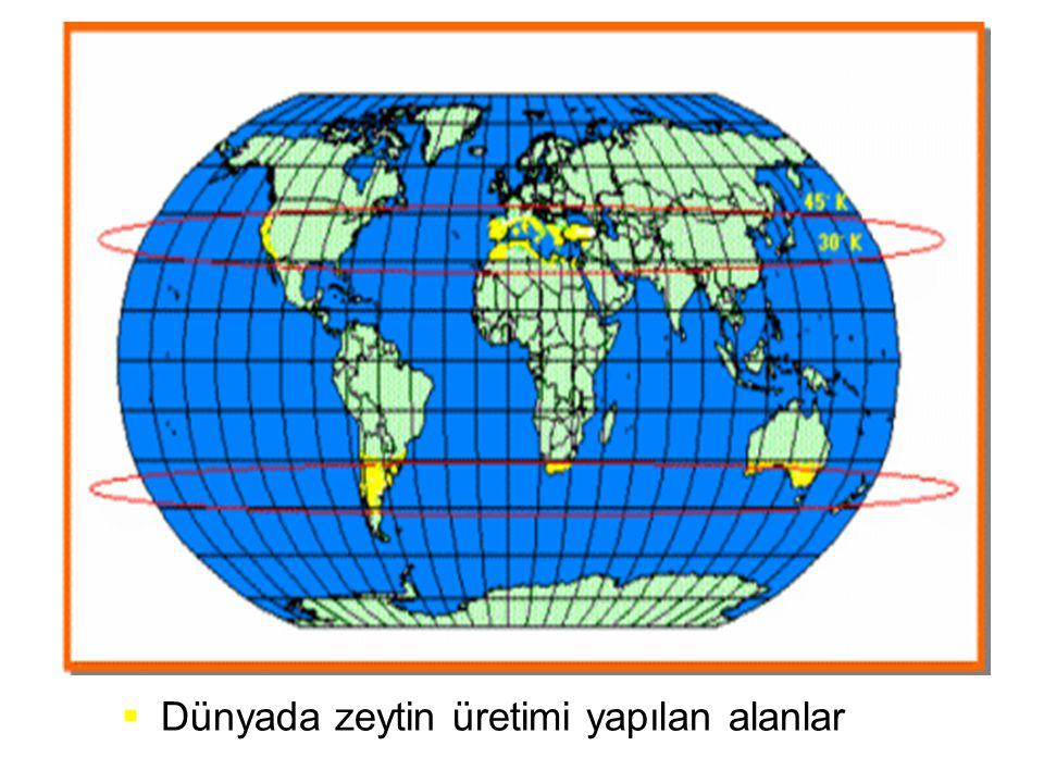 Dünyada zeytin üretimi yapılan alanlar