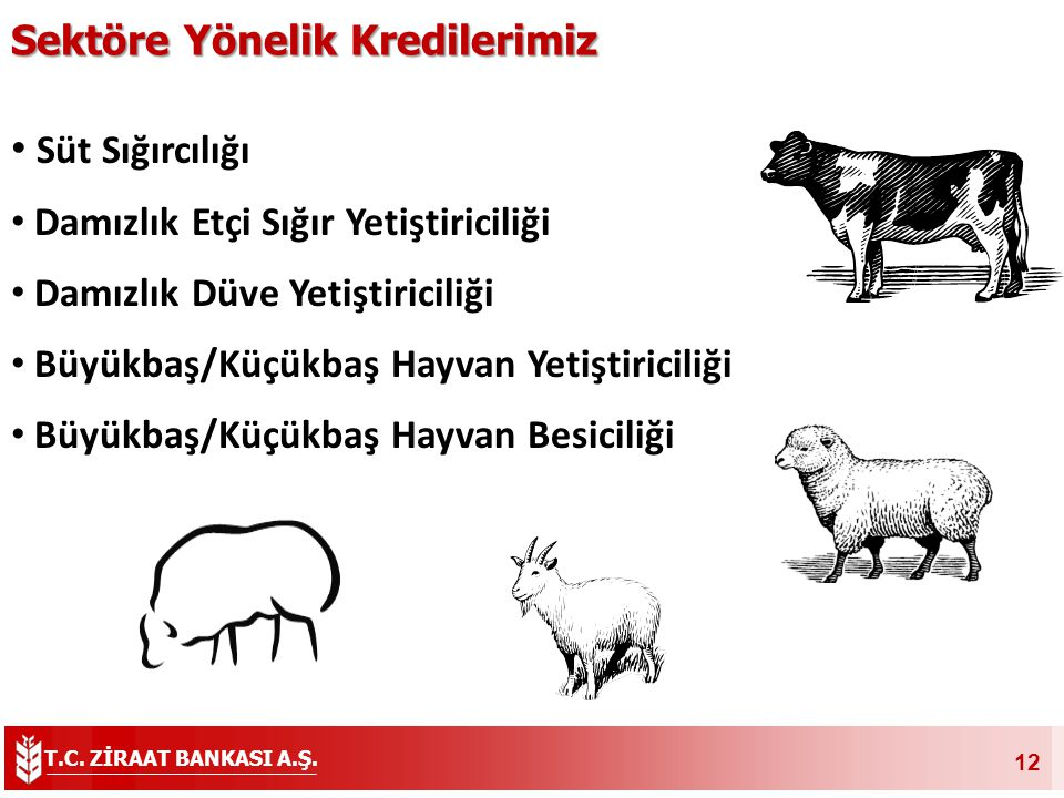 Süt Sığırcılığı Sektöre Yönelik Kredilerimiz