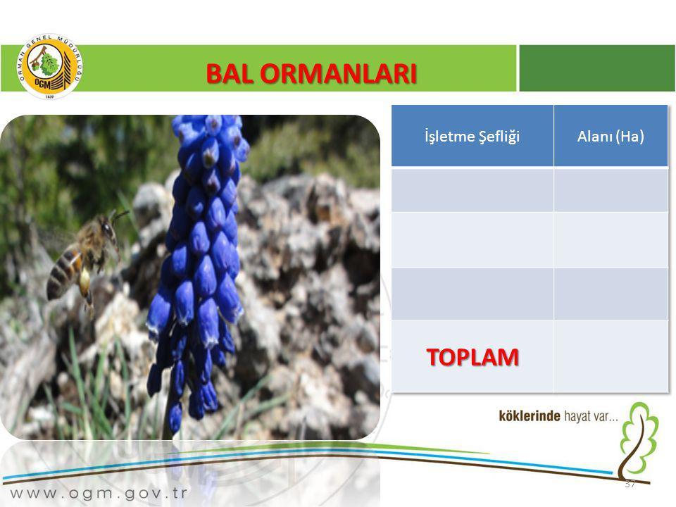 BAL ORMANLARI İşletme Şefliği Alanı (Ha) TOPLAM