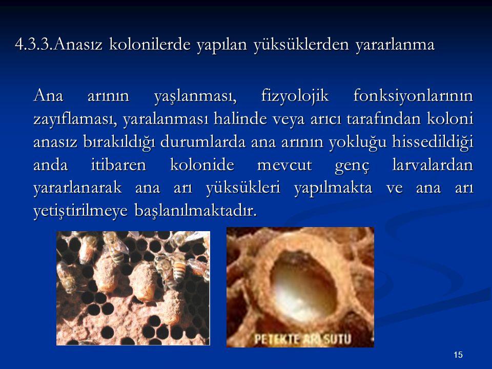4.3.3.Anasız kolonilerde yapılan yüksüklerden yararlanma
