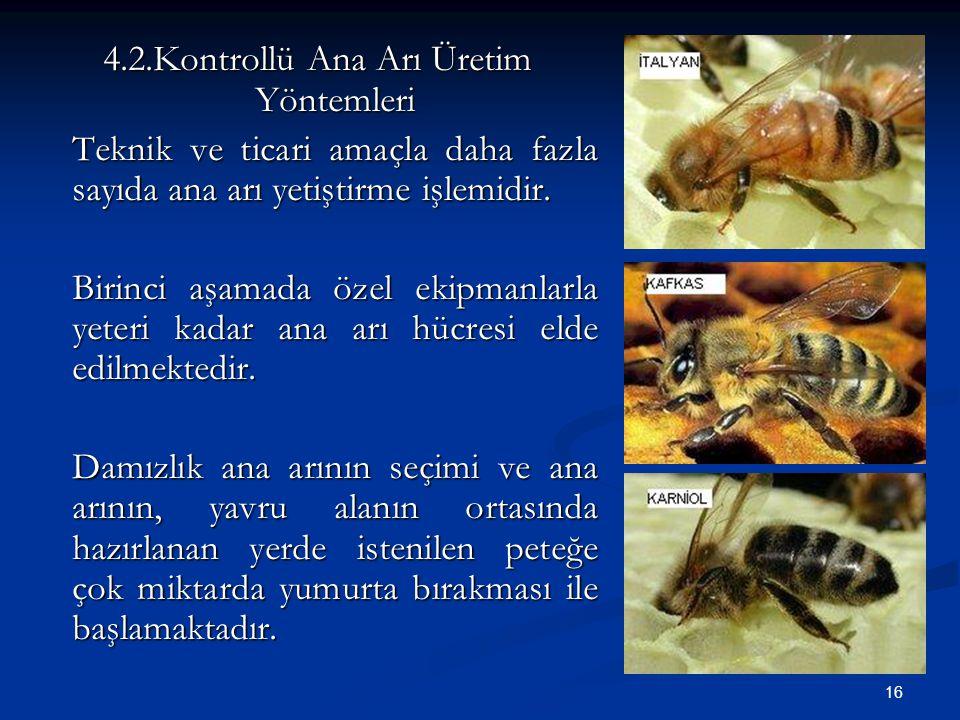 4.2.Kontrollü Ana Arı Üretim Yöntemleri