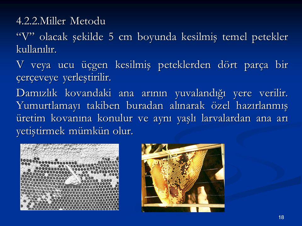 4.2.2.Miller Metodu V olacak şekilde 5 cm boyunda kesilmiş temel petekler kullanılır.