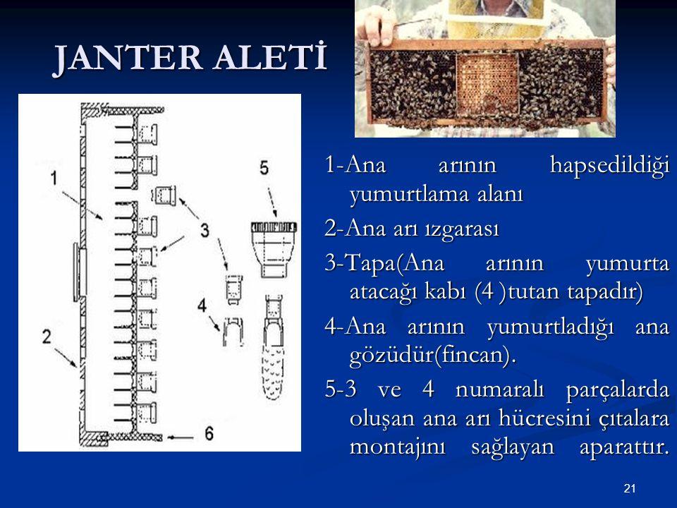 JANTER ALETİ 1-Ana arının hapsedildiği yumurtlama alanı