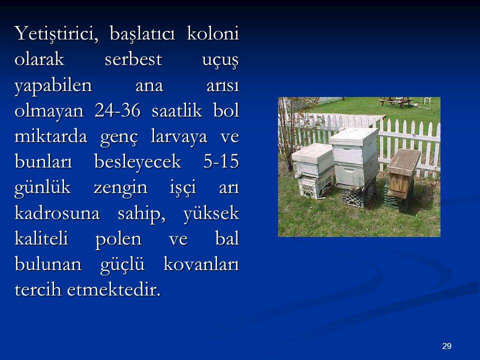 Yetiştirici, başlatıcı koloni olarak serbest uçuş yapabilen ana arısı olmayan 24-36 saatlik bol miktarda genç larvaya ve bunları besleyecek 5-15 günlük zengin işçi arı kadrosuna sahip, yüksek kaliteli polen ve bal bulunan güçlü kovanları tercih etmektedir.