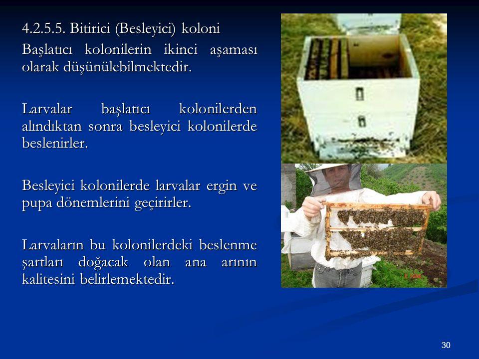 4.2.5.5. Bitirici (Besleyici) koloni