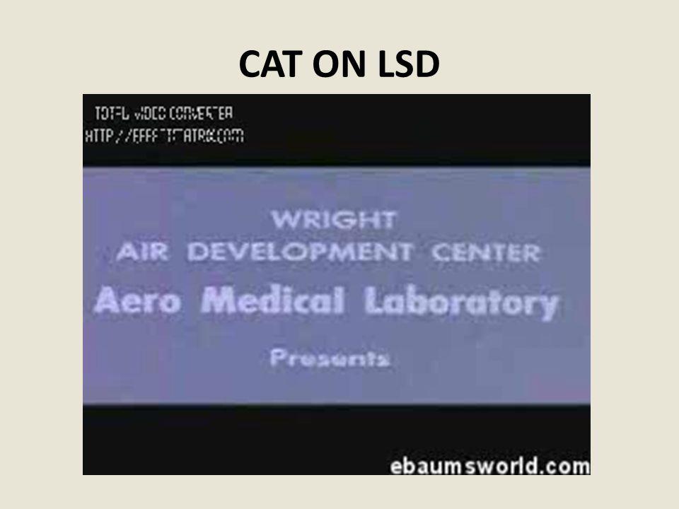 CAT ON LSD