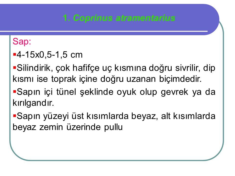 1. Coprinus atramentarius