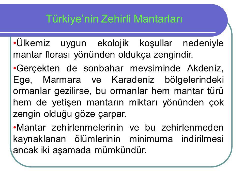 Türkiye'nin Zehirli Mantarları