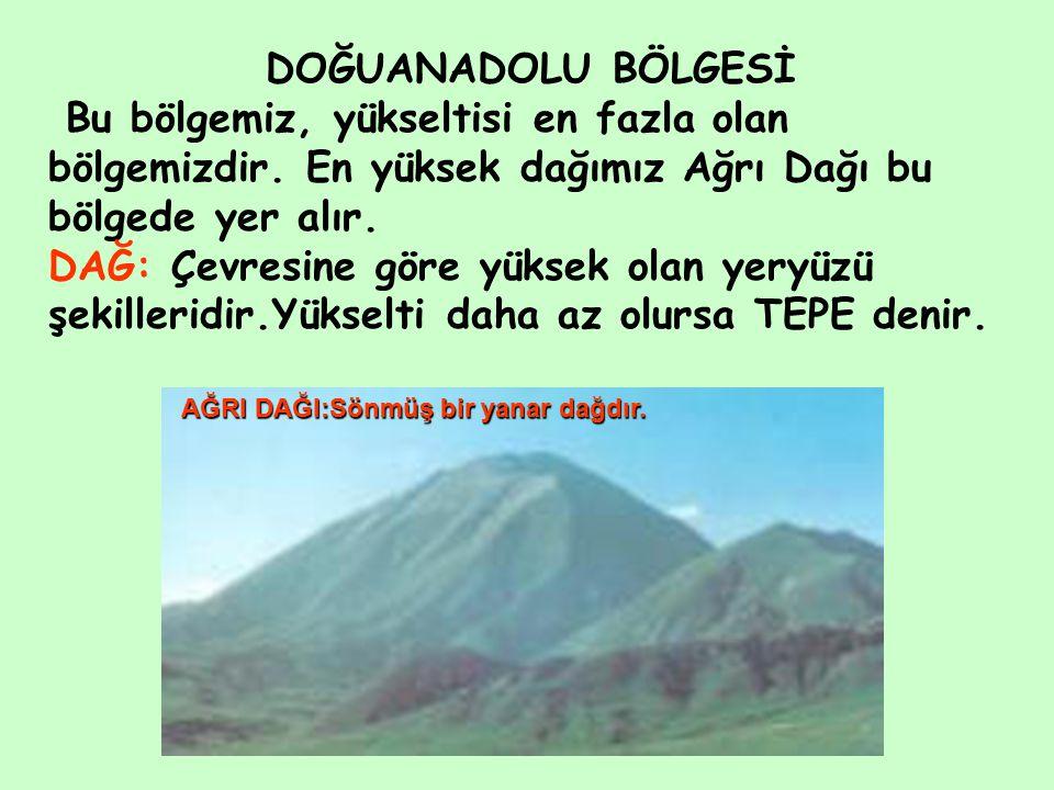 DOĞUANADOLU BÖLGESİ Bu bölgemiz, yükseltisi en fazla olan bölgemizdir. En yüksek dağımız Ağrı Dağı bu bölgede yer alır.