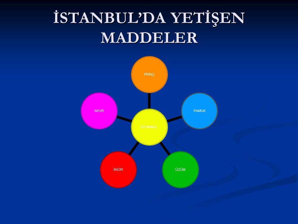 İSTANBUL'DA YETİŞEN MADDELER