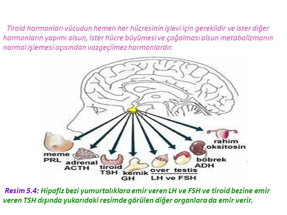 Tiroid hormonları vücudun hemen her hücresinin işlevi için gereklidir ve ister diğer