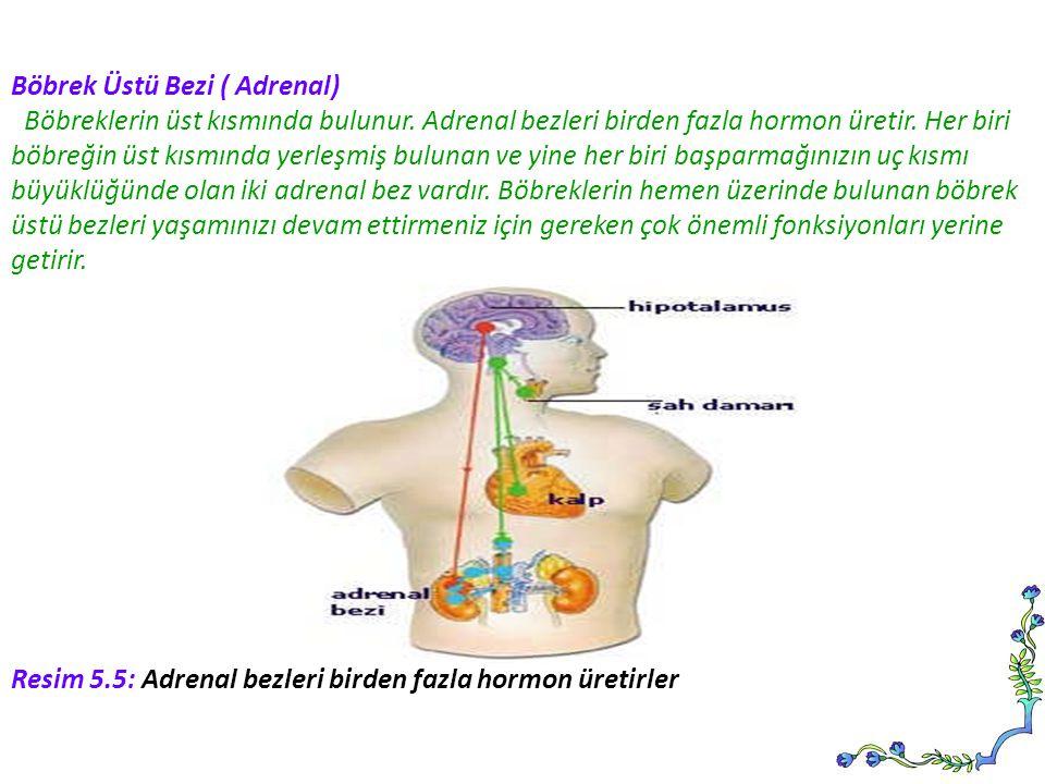 Böbrek Üstü Bezi ( Adrenal)