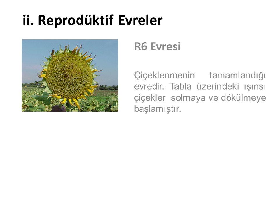 ii. Reprodüktif Evreler