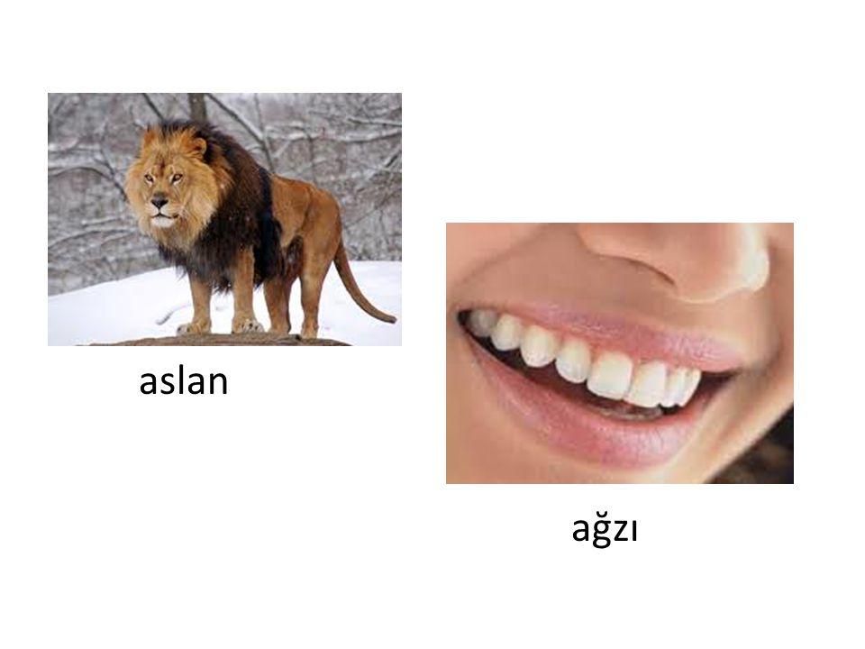 aslan ağzı