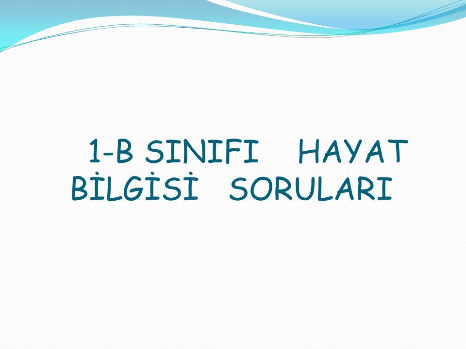 1-B SINIFI HAYAT BİLGİSİ SORULARI