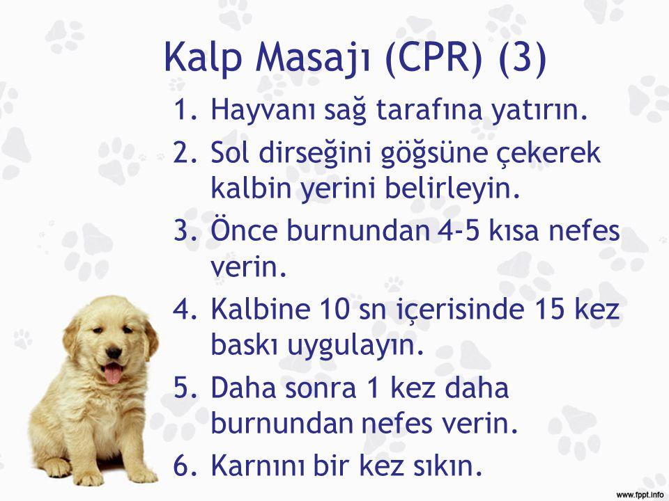 Kalp Masajı (CPR) (3) Hayvanı sağ tarafına yatırın.