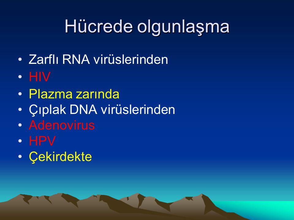 Hücrede olgunlaşma Zarflı RNA virüslerinden HIV Plazma zarında