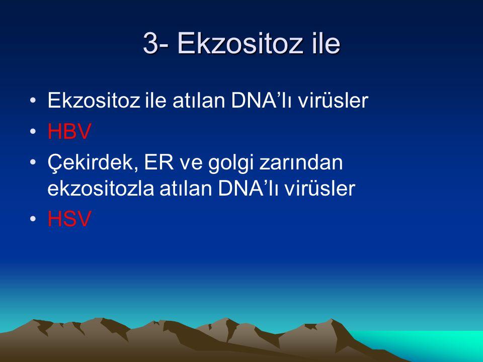 3- Ekzositoz ile Ekzositoz ile atılan DNA'lı virüsler HBV