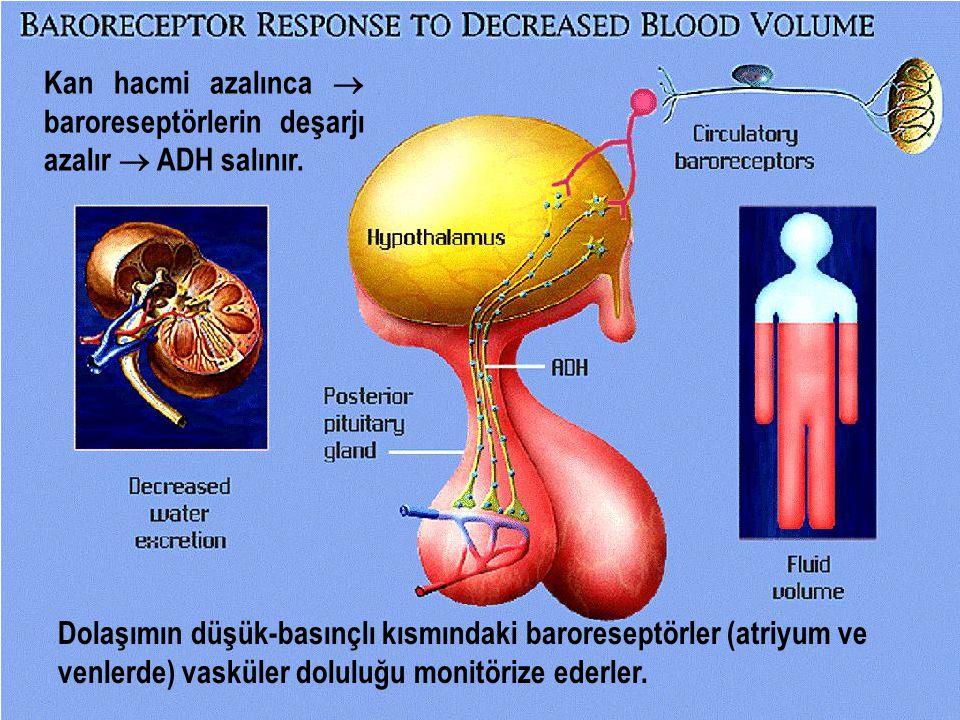 Kan hacmi azalınca  baroreseptörlerin deşarjı azalır  ADH salınır.