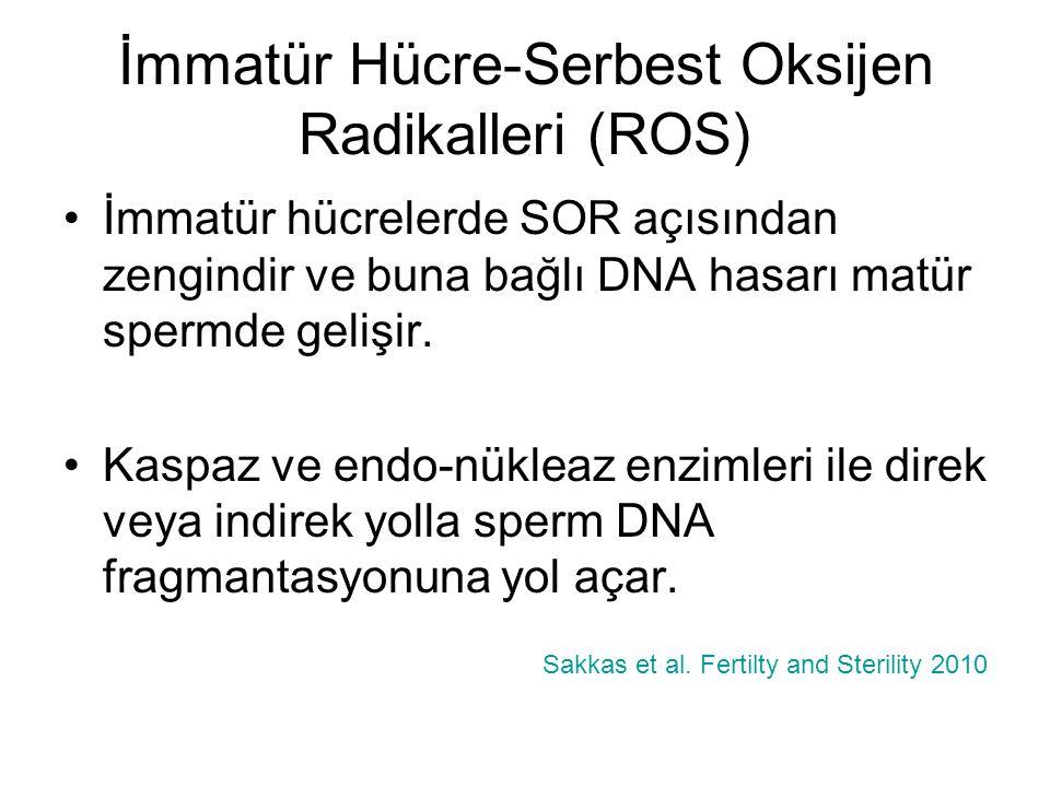 İmmatür Hücre-Serbest Oksijen Radikalleri (ROS)