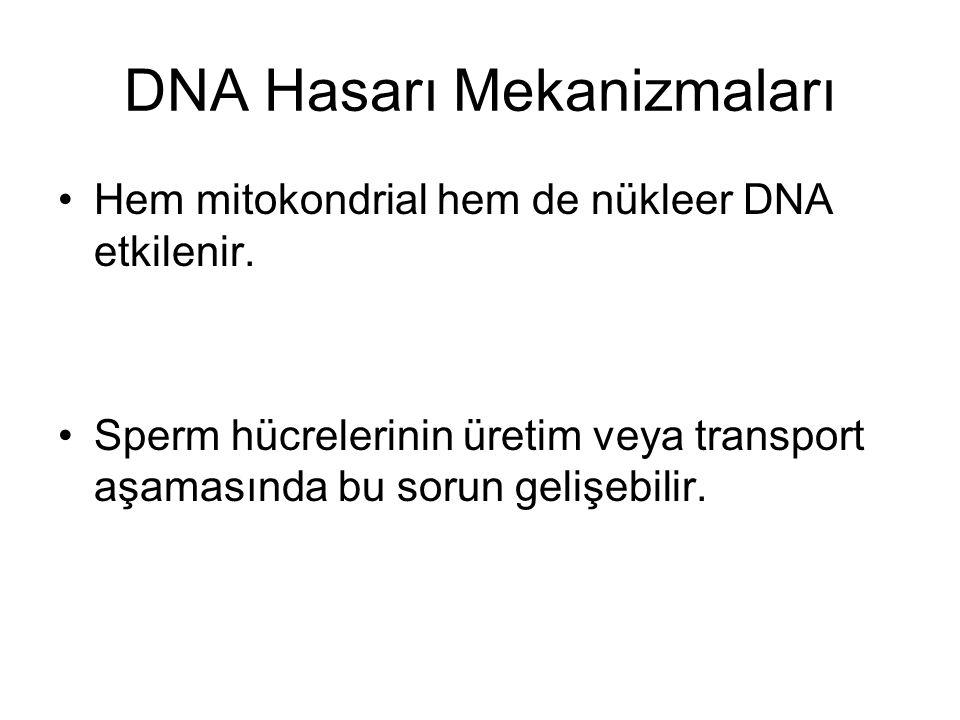 DNA Hasarı Mekanizmaları