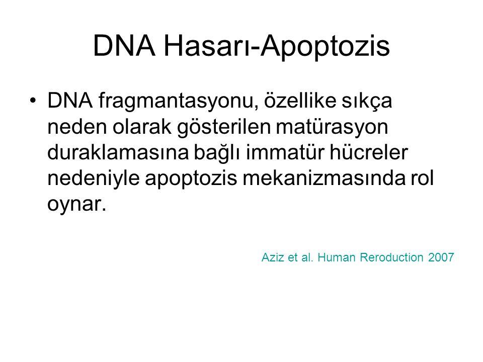DNA Hasarı-Apoptozis