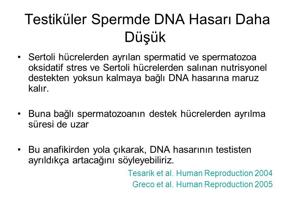 Testiküler Spermde DNA Hasarı Daha Düşük