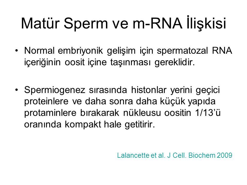 Matür Sperm ve m-RNA İlişkisi