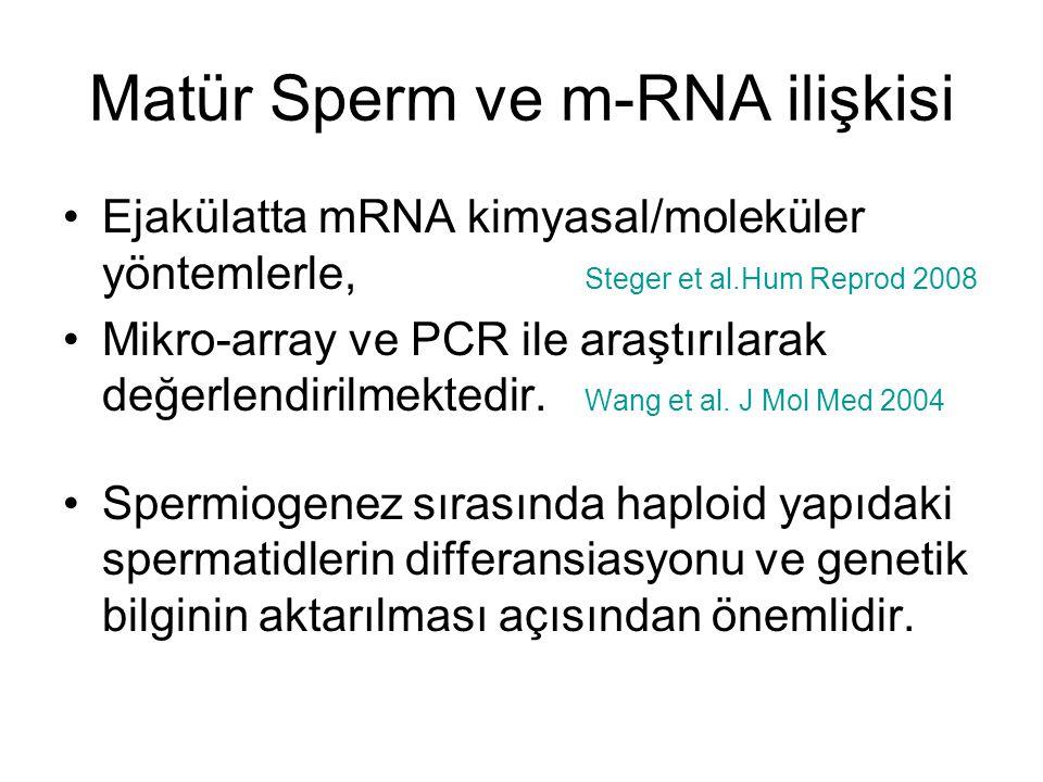 Matür Sperm ve m-RNA ilişkisi