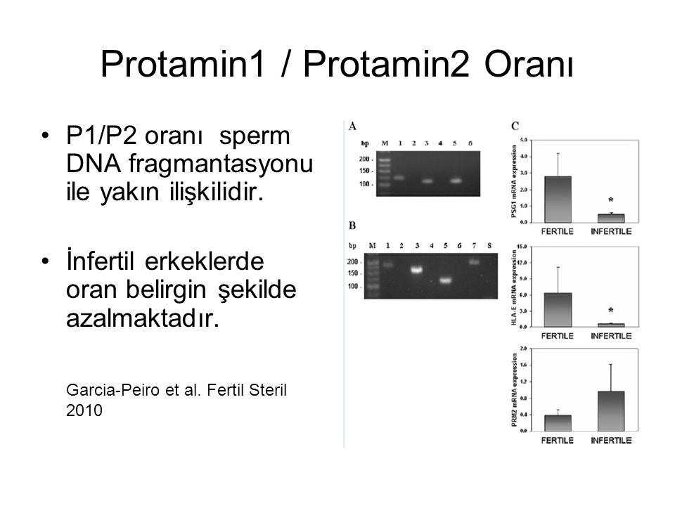 Protamin1 / Protamin2 Oranı