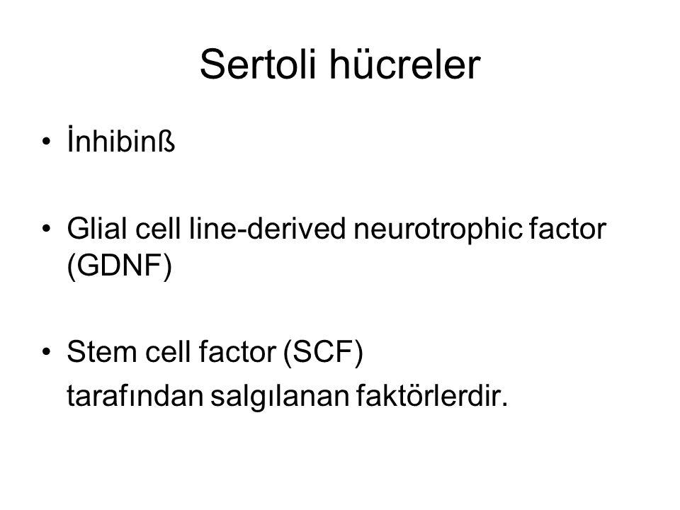 Sertoli hücreler İnhibinß