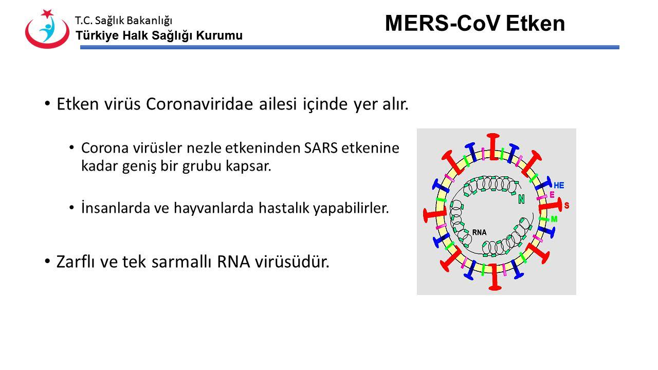 MERS-CoV Etken Etken virüs Coronaviridae ailesi içinde yer alır.