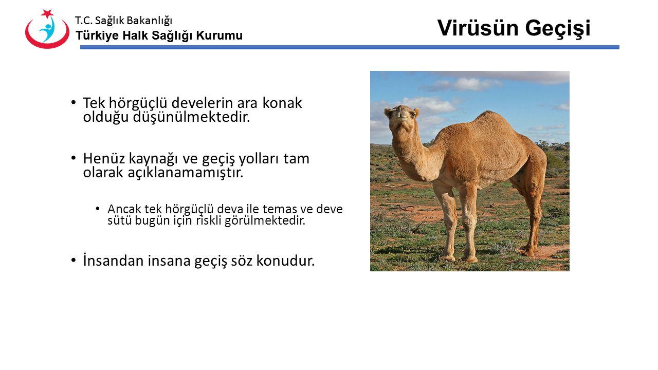 Virüsün Geçişi Tek hörgüçlü develerin ara konak olduğu düşünülmektedir. Henüz kaynağı ve geçiş yolları tam olarak açıklanamamıştır.