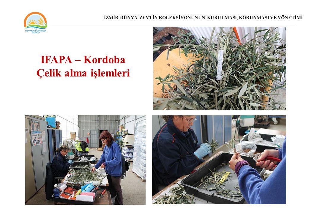 IFAPA – Kordoba Çelik alma işlemleri