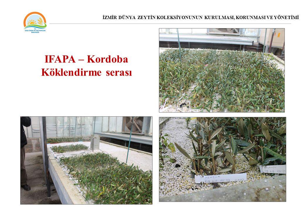 IFAPA – Kordoba Köklendirme serası