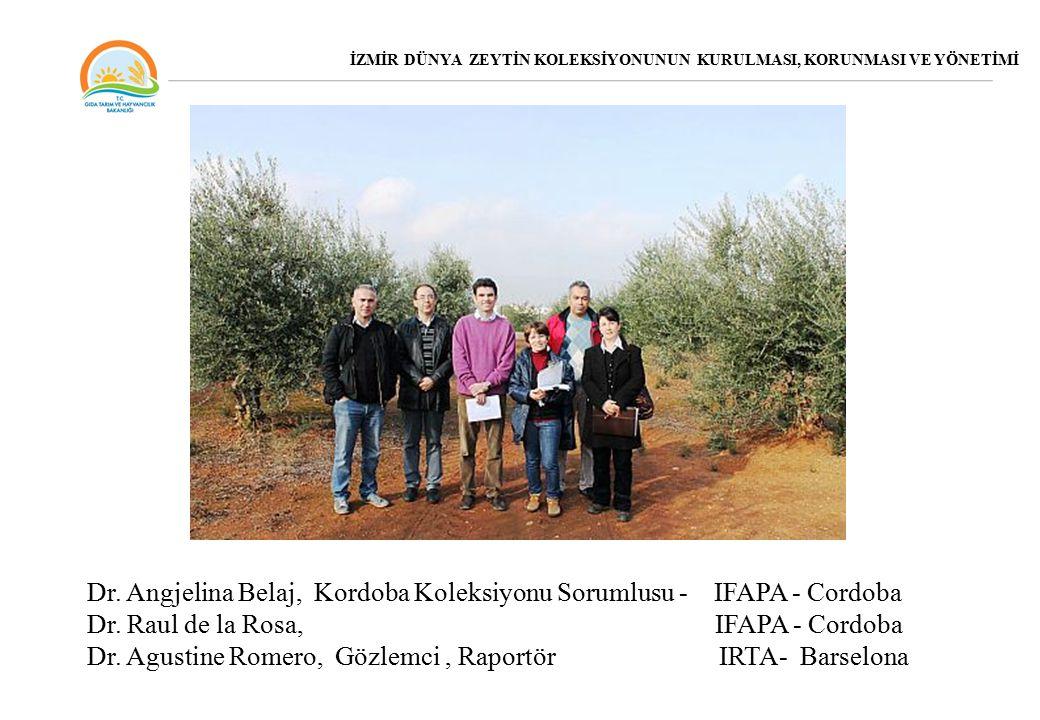 Dr. Angjelina Belaj, Kordoba Koleksiyonu Sorumlusu - IFAPA - Cordoba
