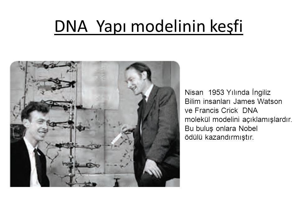 DNA Yapı modelinin keşfi