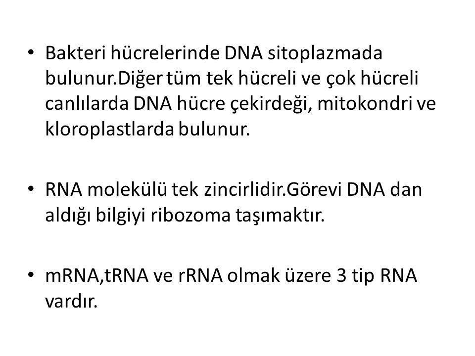 Bakteri hücrelerinde DNA sitoplazmada bulunur