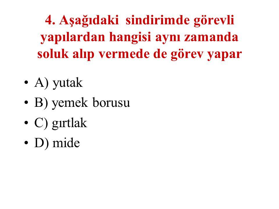 4. Aşağıdaki sindirimde görevli yapılardan hangisi aynı zamanda soluk alıp vermede de görev yapar