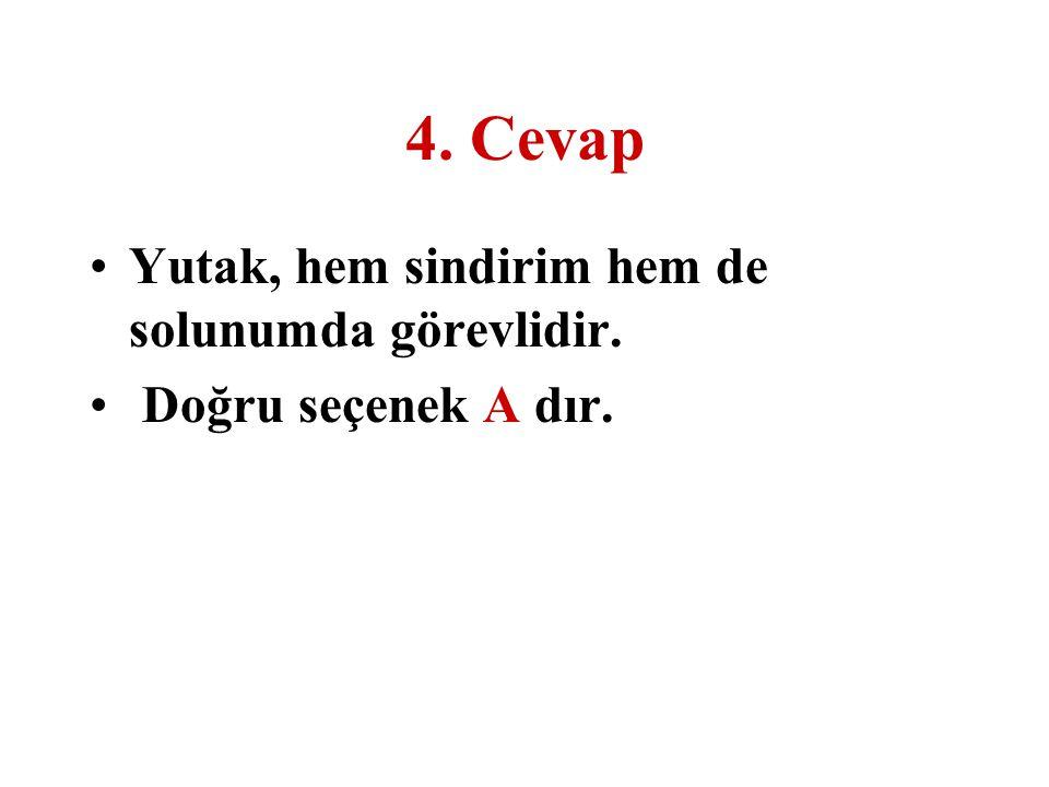 4. Cevap Yutak, hem sindirim hem de solunumda görevlidir.
