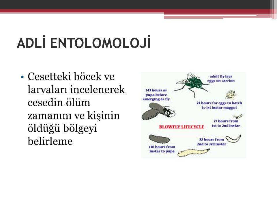 ADLİ ENTOLOMOLOJİ Cesetteki böcek ve larvaları incelenerek cesedin ölüm zamanını ve kişinin öldüğü bölgeyi belirleme.