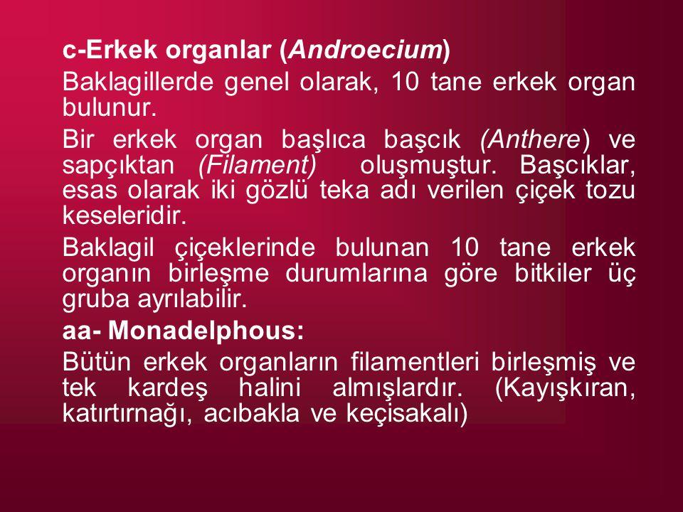 c-Erkek organlar (Androecium)
