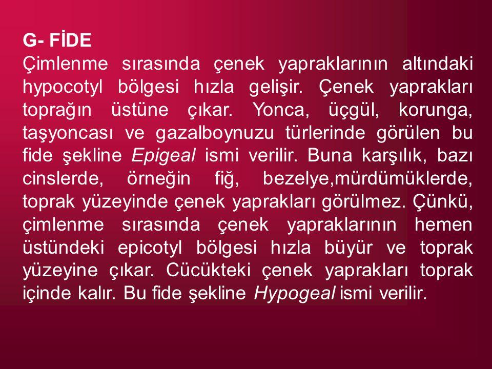 G- FİDE