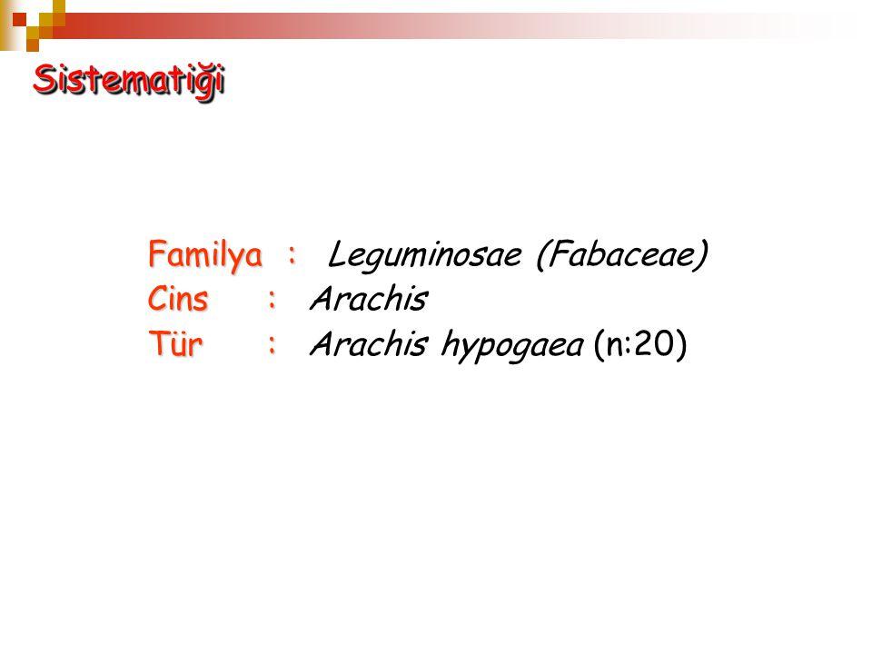 Sistematiği Familya : Leguminosae (Fabaceae) Cins : Arachis