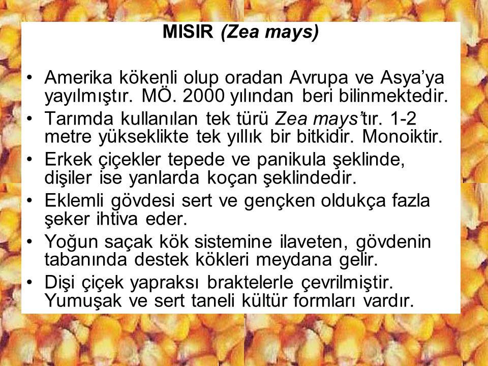 MISIR (Zea mays) Amerika kökenli olup oradan Avrupa ve Asya'ya yayılmıştır. MÖ. 2000 yılından beri bilinmektedir.