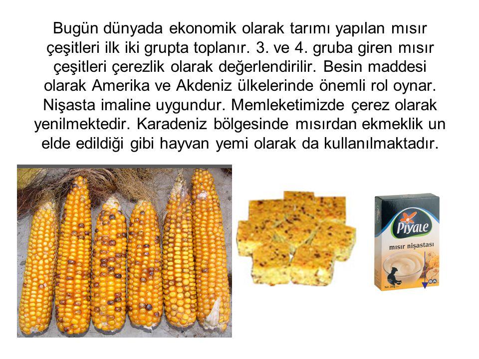 Bugün dünyada ekonomik olarak tarımı yapılan mısır çeşitleri ilk iki grupta toplanır. 3. ve 4. gruba giren mısır çeşitleri çerezlik olarak değerlendirilir. Besin maddesi olarak Amerika ve Akdeniz ülkelerinde önemli rol oynar. Nişasta imaline uygundur. Memleketimizde çerez olarak yenilmektedir. Karadeniz bölgesinde mısırdan ekmeklik un elde edildiği gibi hayvan yemi olarak da kullanılmaktadır.